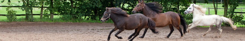 Pferde Artikelbild